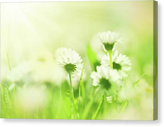 Blade Of Grass Canvas Print - Beautiful Morning by Jeja