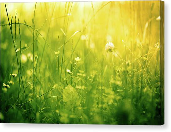 Blade Of Grass Canvas Print - Beautiful Nature In Green And Yellow by Jeja