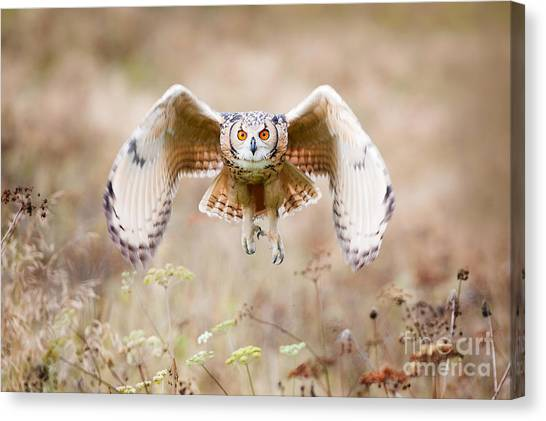 No-one Canvas Print - Beautiful Owl Photographed While by Jaroslaw Saternus