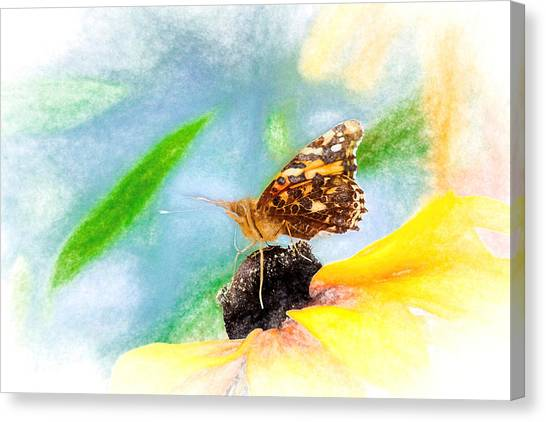 Beautiful Painted Lady Butterfly Canvas Print