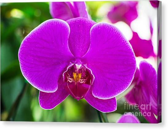 Botany Canvas Print - Beautiful Purple Orchid Flowers by Daimond Shutter