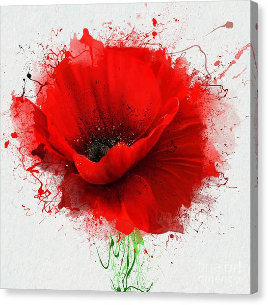 Background Canvas Print - Beautiful Red Poppy, Closeup On A White by Pacrovka