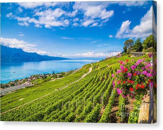 Farmland Canvas Print - Beautiful Scenery With Rows Of Vineyard by Canadastock