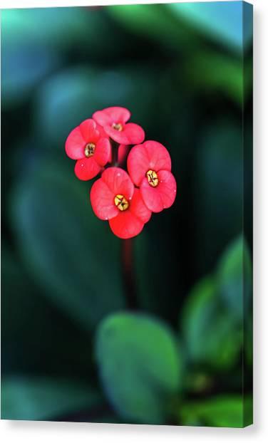 Beautiful Summer Flowers Canvas Print