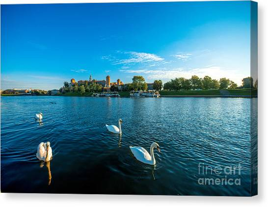 Swan Canvas Print - Beautiful View On Vistula River With by Rosshelen