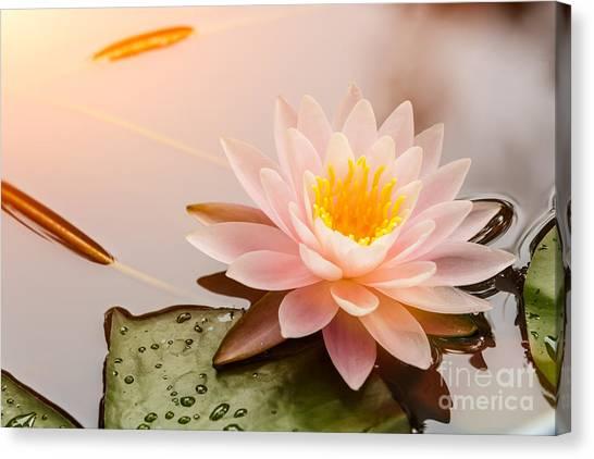 Beauty Canvas Print - Beautiful  Waterlily Or Lotus Flower by Zhao Jiankang