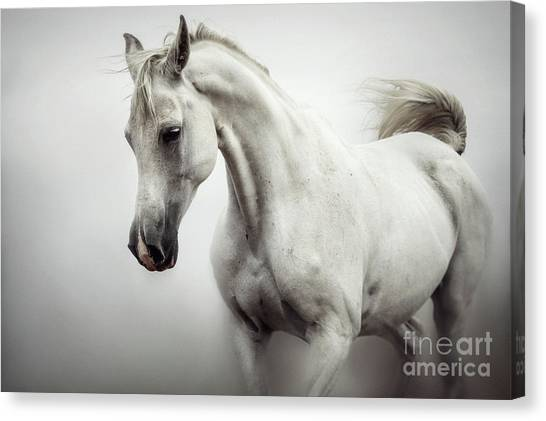 Canvas Print featuring the photograph Beautiful White Horse On The White Background by Dimitar Hristov