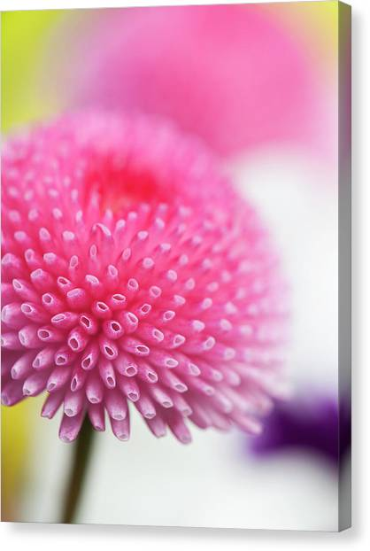Beauty In  Nature Canvas Print by Andrew Dernie