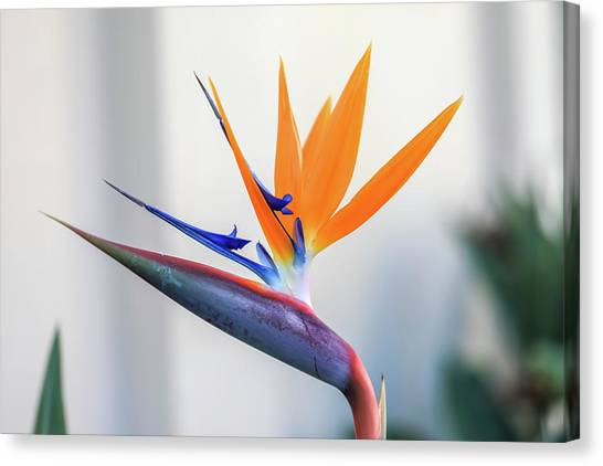 Beauty In Paradise Canvas Print