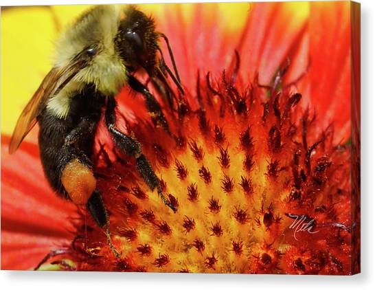 Bee Red Flower Canvas Print