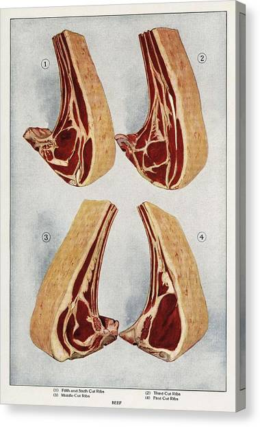 Ribeye Canvas Print - Beef Ribs From The Book, The Grocers Encyclopedia 1911 by MotionAge Designs