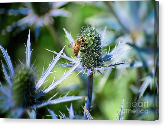 Bee's Got The Blues Canvas Print