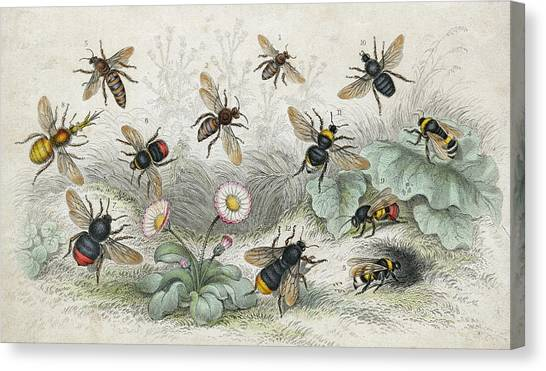 Bees In Colour Canvas Print by Hulton Archive