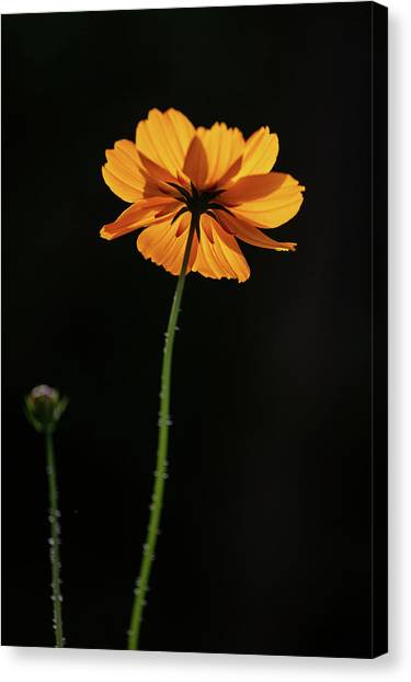 Canvas Print featuring the photograph Behind Light And Shadow by Dale Kincaid