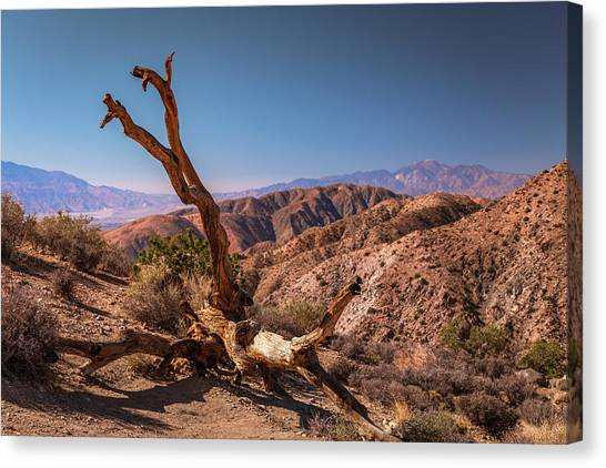 Behold, A Dead Tree Canvas Print
