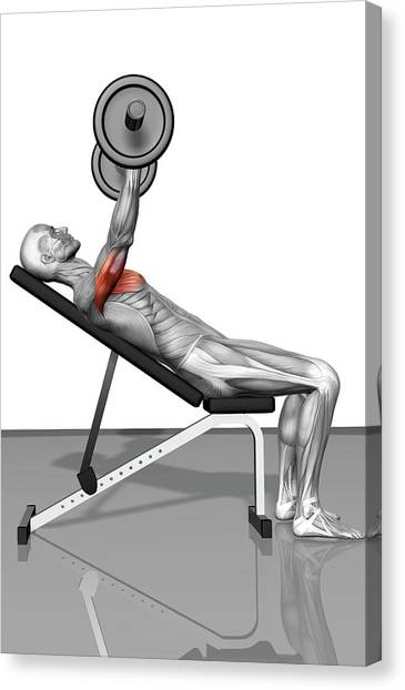 Bench Press Incline Part 1 Of 2 Canvas Print by Medicalrf.com