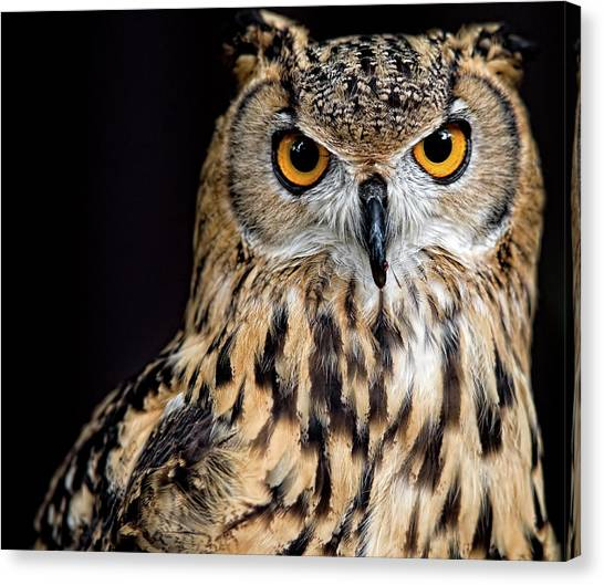 Bengal Eagle Owl Stare Canvas Print