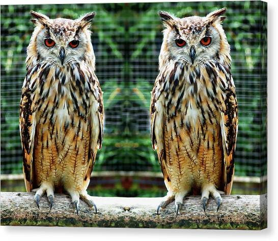 Canvas Print featuring the photograph Bengalese Eagle Owls by Anthony Dezenzio
