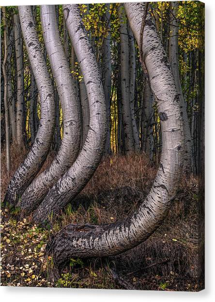 Bent Out Of Shape Canvas Print