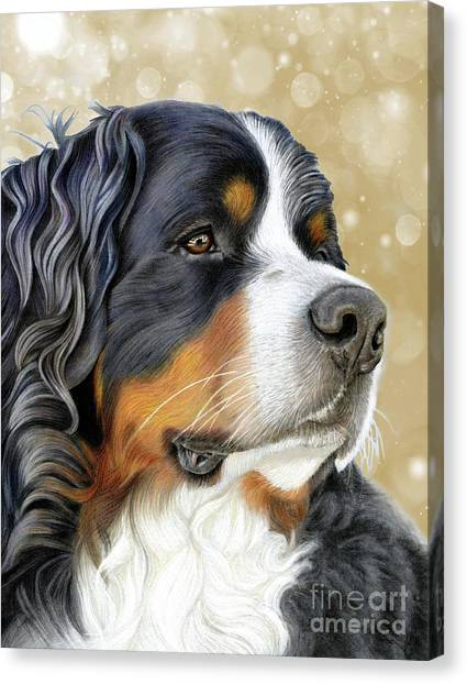 Canvas Print featuring the mixed media Bernese Old Gold by Donna Mulley