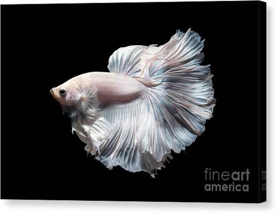 Dress Canvas Print - Betta Fish,siamese Fighting Fish In by Nuamfolio