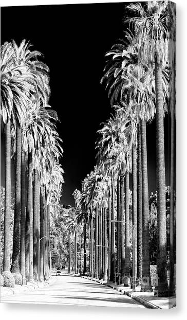 Beverly Hills Canvas Print - Beverly Hills California by John Rizzuto