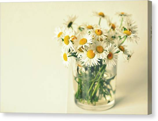 Vase Of Flowers Canvas Print - Big Bunch Of Camomile Flowers by Photo By Ira Heuvelman-dobrolyubova