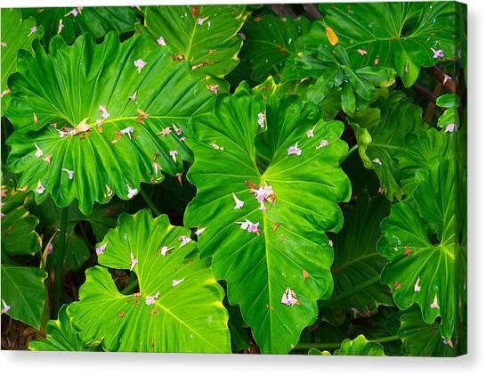 Big Green Leaves Canvas Print