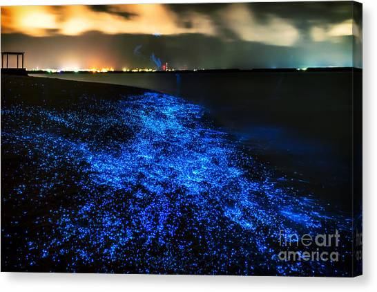 Tides Canvas Print - Bio Luminescence. Illumination Of by Pawelg Photo