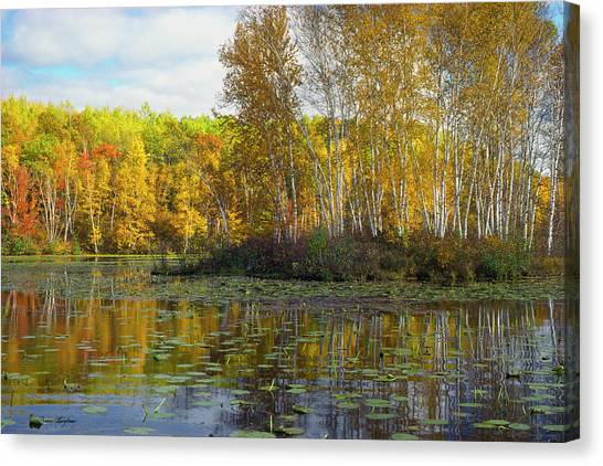 Birch Island Canvas Print