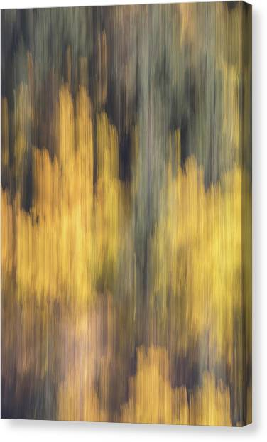 Birch Trees In The Fall  Canvas Print by K Pegg