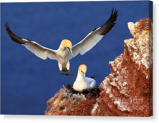 Bird Landind To The Nest With Female Canvas Print by Ondrej Prosicky