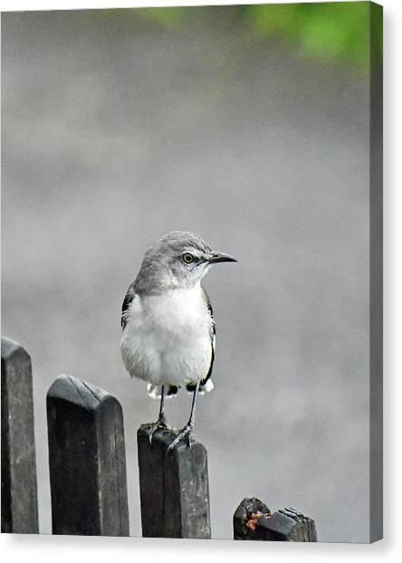 Bird Of Strawberry Hill Canvas Print