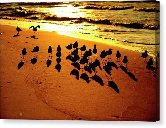 Bird Shadows Canvas Print
