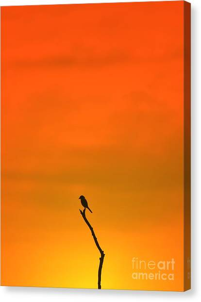 Contour Canvas Print - Bird Silhouette - Wildlife Background - by Stacey Ann Alberts