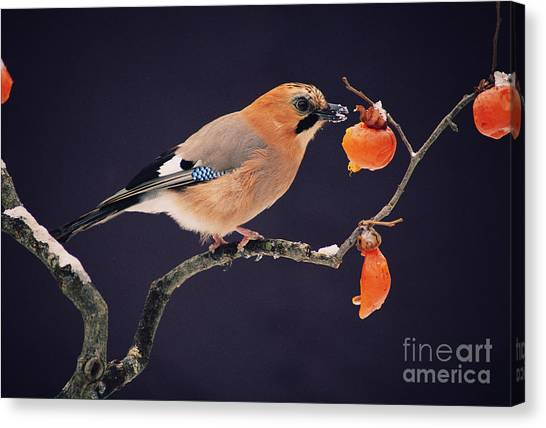 Bush Canvas Print - Bird by Wizdata