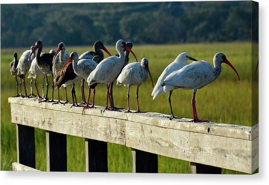 Birds Of A Feather On Jekyll Island Canvas Print
