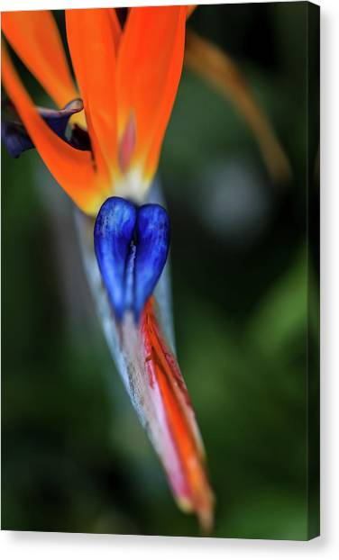 Birds Of Paradise Up Close Canvas Print