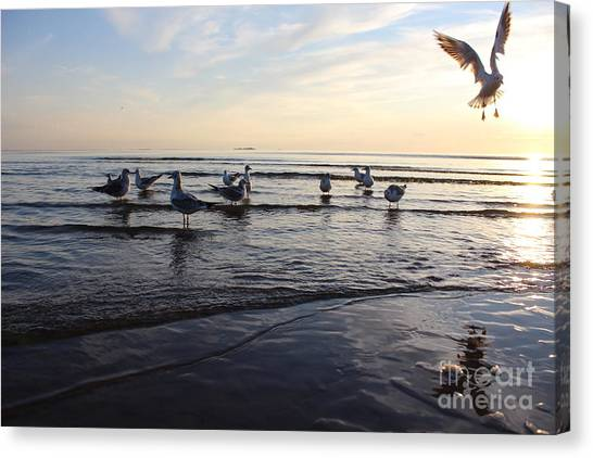 Seagull Canvas Print - Birds On The Sunset. Seagulls At Sunset by Antshev