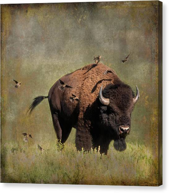 Bison And Friends Canvas Print