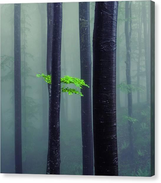 Bit Of Green Canvas Print