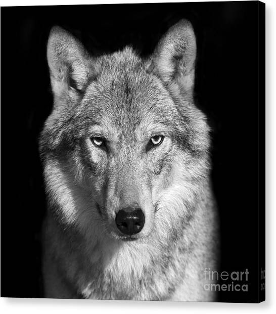 Grey Background Canvas Print - Black And White Close Up Portrait Of by Olga gl