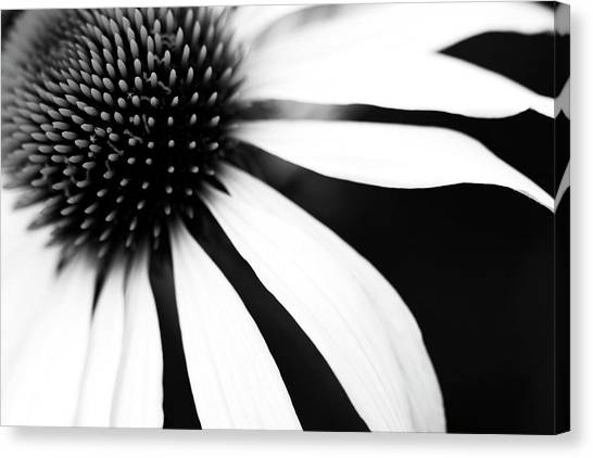 Floral Canvas Print - Black And White Flower Maco by Johan Klovsjö