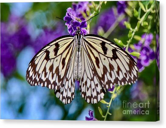 Black And White Paper Kite Butterfly Canvas Print