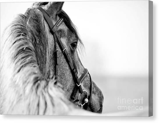 Livestock Canvas Print - Black-and-white Portrait Of A Sports by Elya Vatel