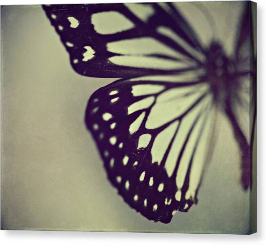 Butterfly Canvas Print - Black And White Wings by Amelia Kay Photography