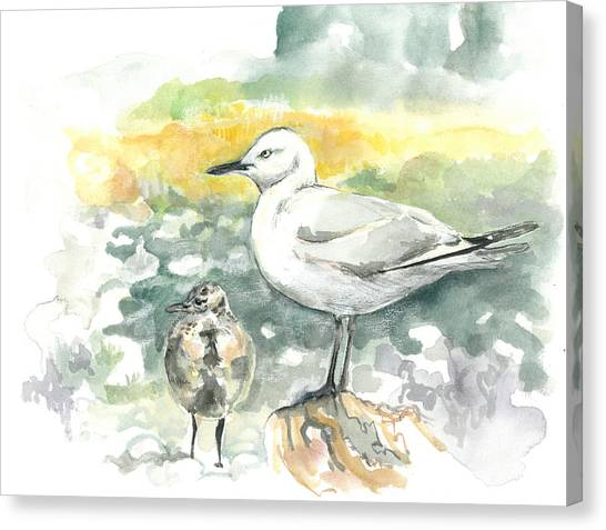 Black-billed Gull Family Canvas Print