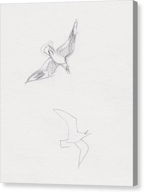 Black-billed Gulls Canvas Print