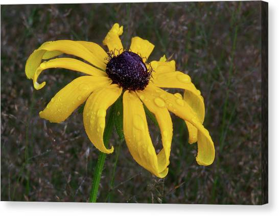 Canvas Print featuring the photograph Black Eyed Susan by Dale Kincaid