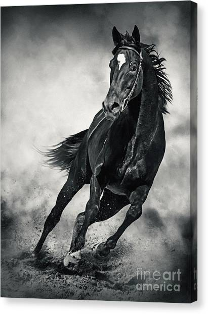 Canvas Print featuring the photograph Black Horse Running Wild Black And White by Dimitar Hristov